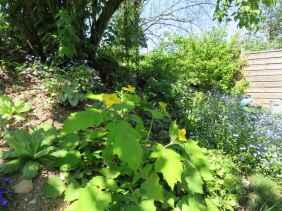 Stylophorum lasiocarpum