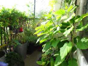 végétaux sains