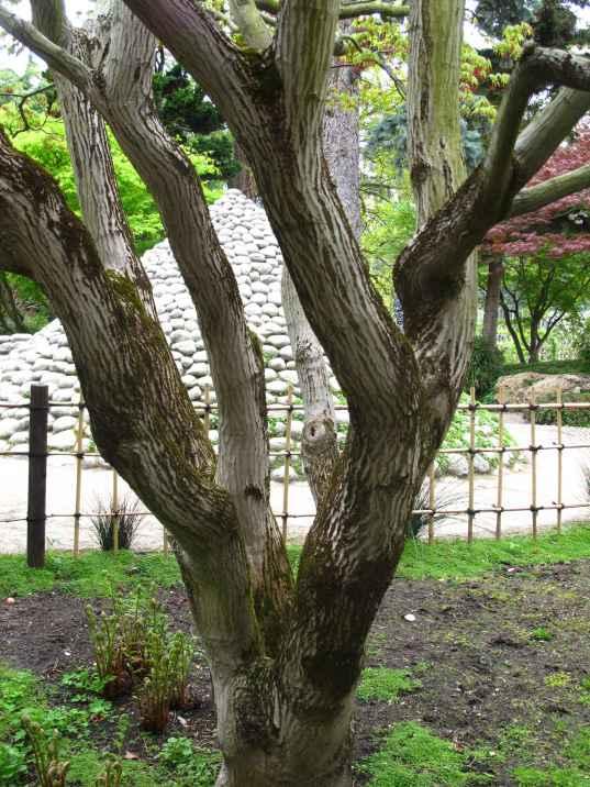 Jardin Albert Kahn (113)