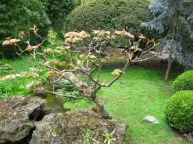 Jardin Albert Kahn (116)