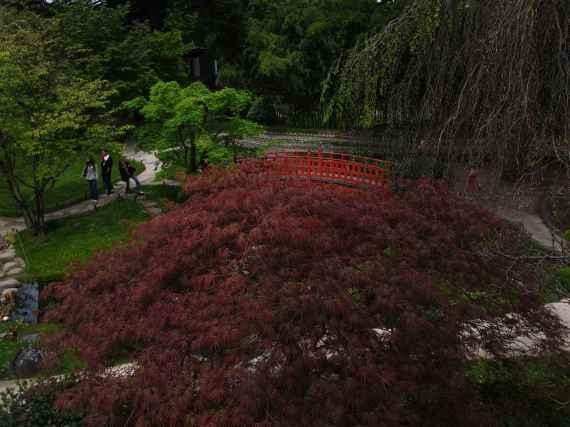 Jardin Albert Kahn (14)