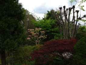Jardin Albert Kahn (18)