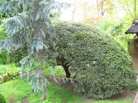 Jardin Albert Kahn (45)