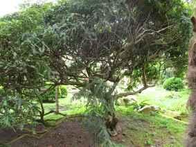 Jardin Albert Kahn (46)