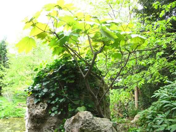 Jardin Albert Kahn (50)