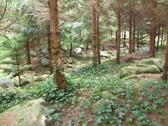 Jardin Albert Kahn (53)