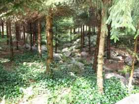 Jardin Albert Kahn (54)