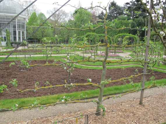 Jardin Albert Kahn (63)