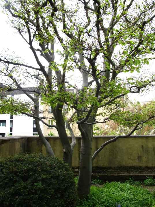 Jardin Albert Kahn (86)
