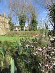 Salix erythroflexuosa Prunus kojo no mai tulipa 1