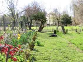 Salix erythroflexuosa Prunus kojo no mai tulipa 2