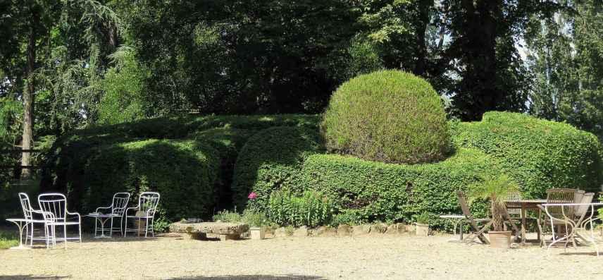 Zelkova carpinifolia Buxus sempervirens