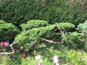 Niwaki 2012 (2)