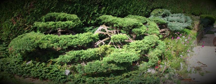 Niwaki 2012 (8)