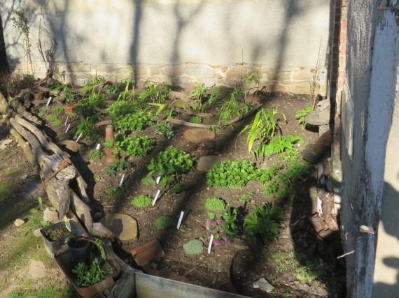 plantation massif d'ombre