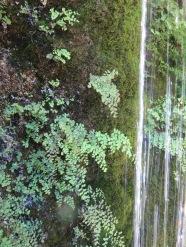 Jardin des fontaines pétrifiantes (39)